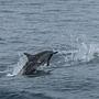 海豚的個人秀3.jpg