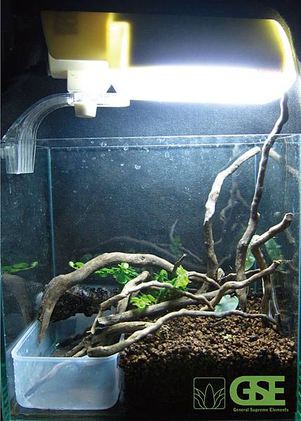 角蛙模組2