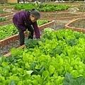 ~有機蔬菜~~