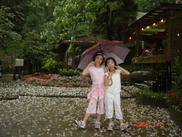 細雨紛飛ㄉ油桐花~~雨