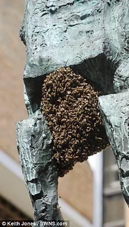 胯下一大包! 蜜蜂群攻英國雕像_420