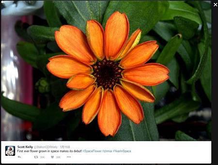 無重力環境生長 太空第1朵花盛開090