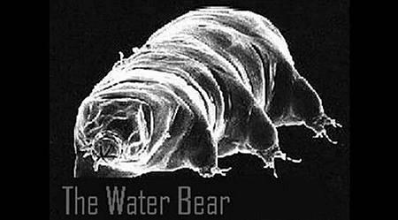 「最強不死生物」水熊蟲 為人類移民太空當先鋒
