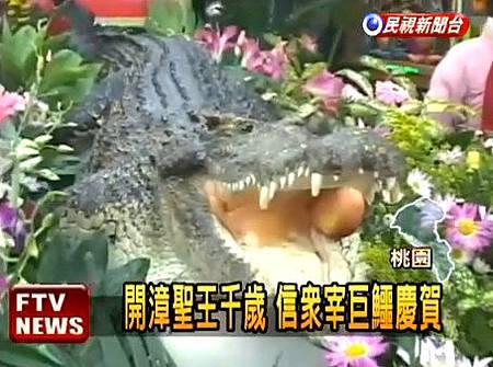 開漳聖王千歲 信眾宰巨鱷慶賀.jpg