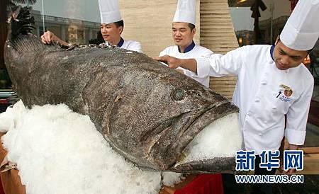 巨型石斑魚 現身浙江紹興.jpg
