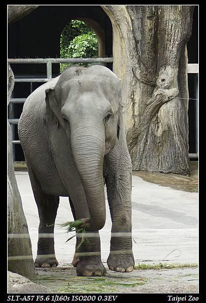 zoo21
