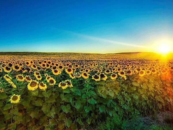 風景~向日葵.jpg