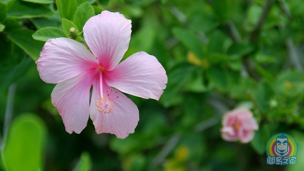 JOHN遊關島 好攝第四物 植物