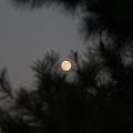 月亮已高高掛起