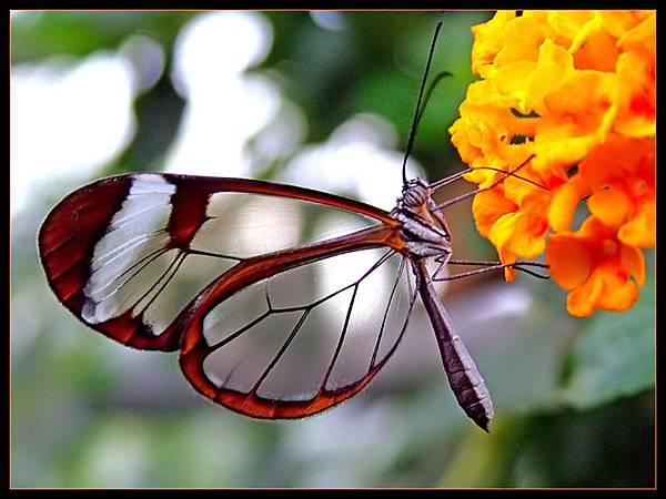 有些毛毛蟲比較特別,不只是軟綿綿,還會進行蛹化,然後變成一隻蝴蝶,展翅高飛,不再沉迷於地上的世界。