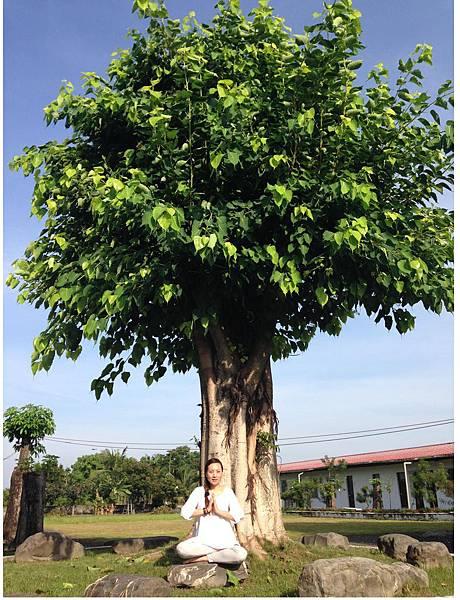 覺妙妙蓮師姐與菩提樹