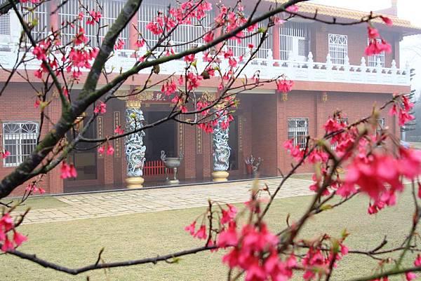 從櫻花樹看禪寺-2