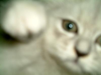 古馳貓:蘇小菲的【靠】!!妳拍什麼拍!!??