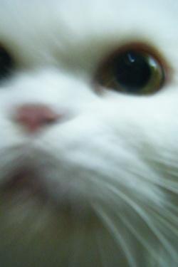 古馳貓:【靠】~這麼近幹嘛啦!!!艾小波