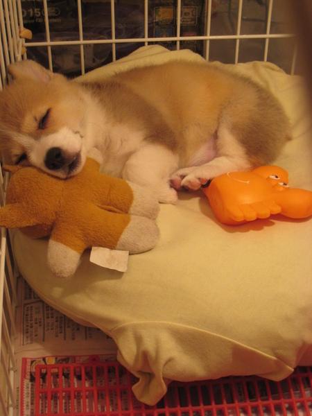 娃娃當枕頭
