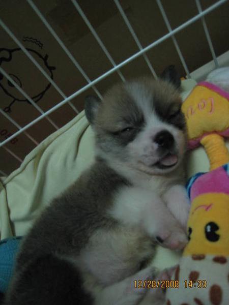 娃娃陪睡..睡覺舌頭也會吐出來
