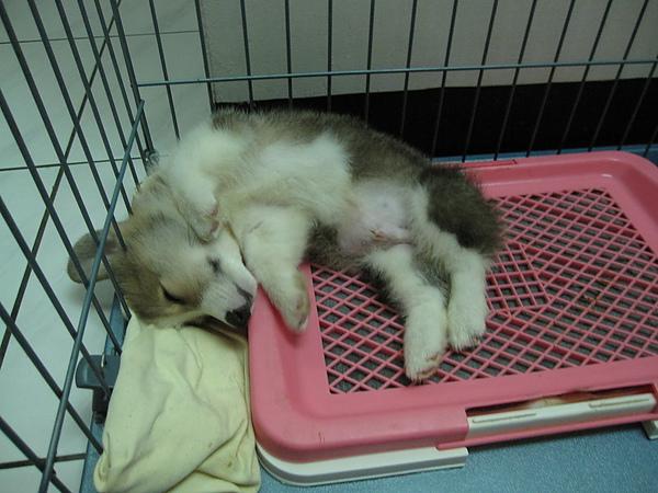 瑜伽式睡法