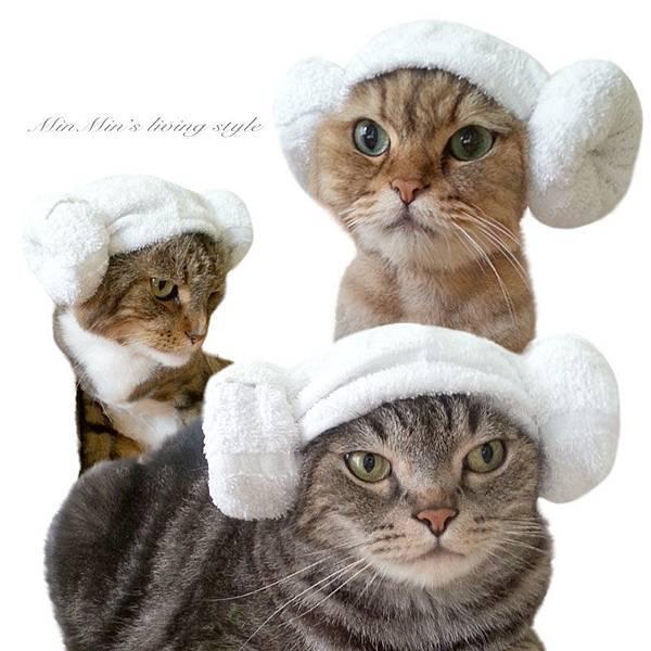 3貓戴帽-3