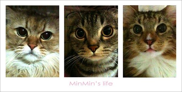 cats01拷貝.jpg