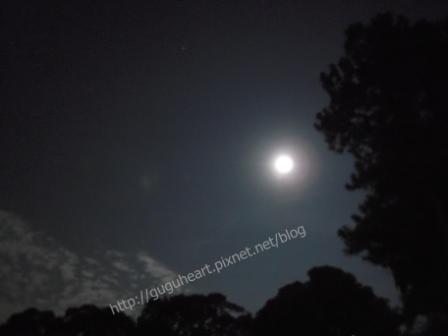 月光浮水照.jpg
