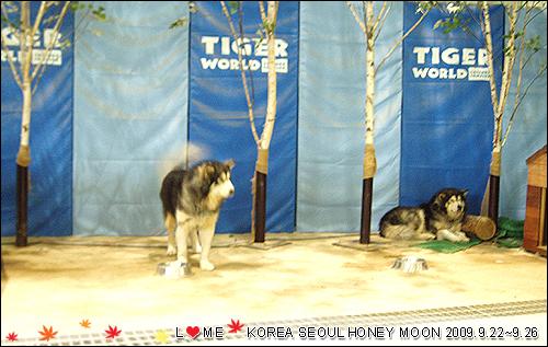 KOREA-032.JPG