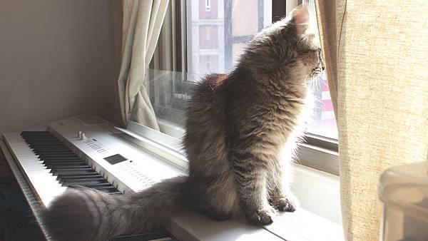 cat-1228.jpg