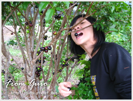 樹葡萄之旅04.jpg