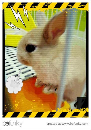 喬比兔的第一次03.jpg