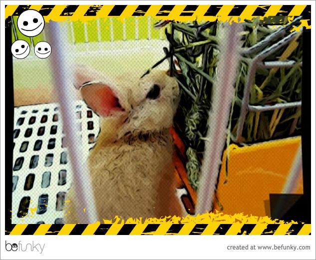 喬比兔的第一次02.jpg