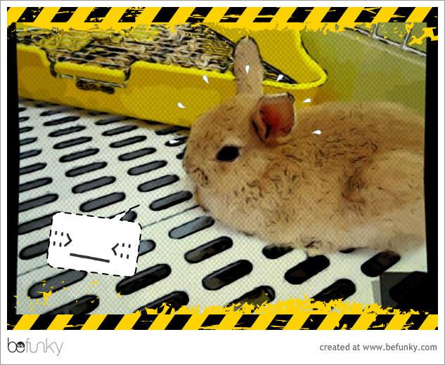 喬比兔的第一次01.jpg
