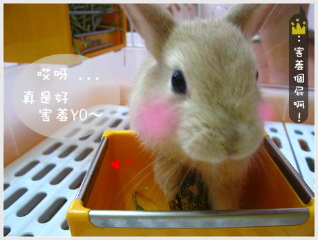 諾兔爾之貪吃鬼獎02.jpg