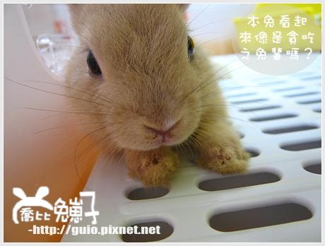 諾兔爾之貪吃鬼獎04.jpg