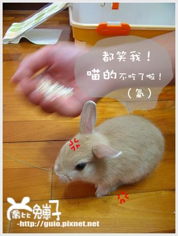 諾兔爾之貪吃鬼獎07.jpg