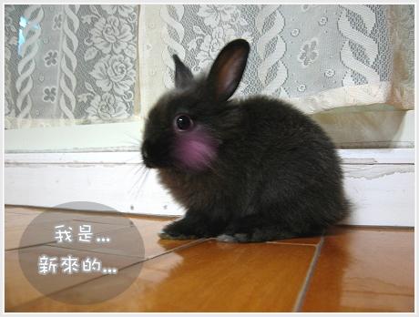 新來的黑卡兔01.jpg