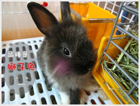 新來的黑卡兔3.jpg