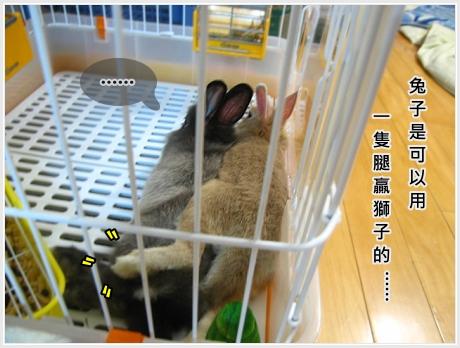 生活不是動物棋01.jpg