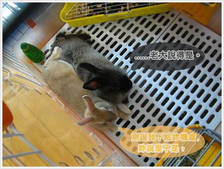 生活不是動物棋04.jpg