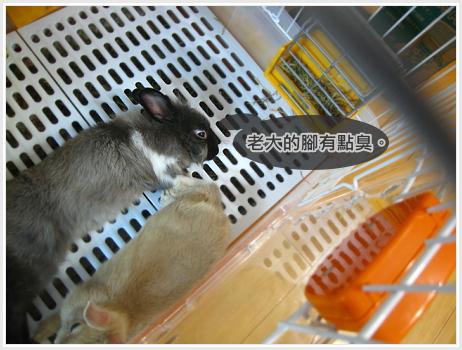 生活不是動物棋05.jpg