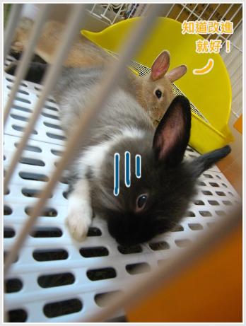 生活不是動物棋08.jpg