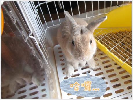 會變色的兔兔01.jpg
