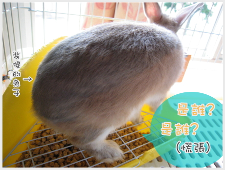 會變色的兔兔02.jpg