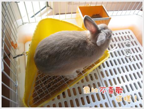 會變色的兔兔03.jpg