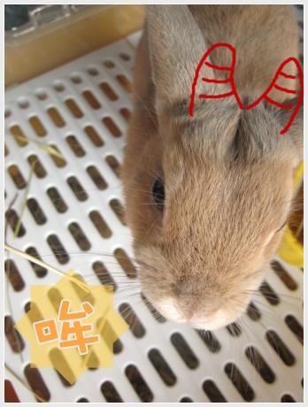 會變色的兔兔04.jpg