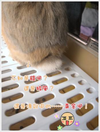 會變色的兔兔07.jpg