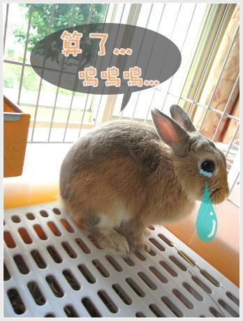 會變色的兔兔08.jpg