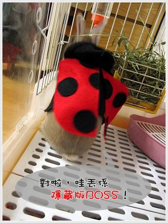 隱藏版兔兔01.jpg