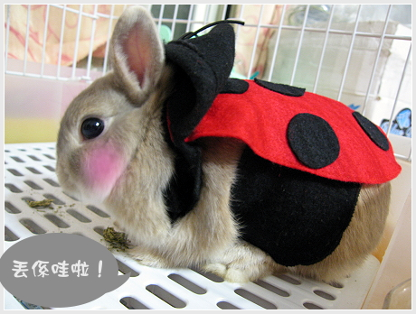 隱藏版兔兔04.jpg