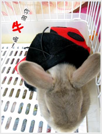 隱藏版兔兔05.jpg