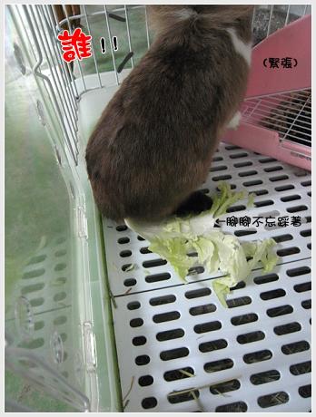 高麗菜好好吃03.jpg