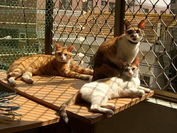 我的三隻喵